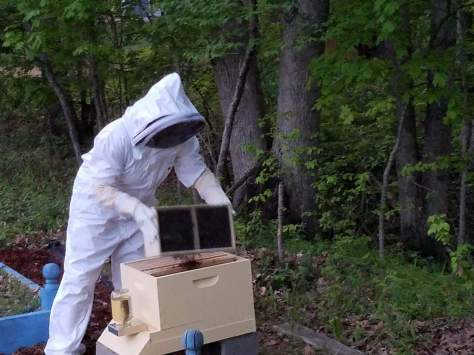 dumping in the bees